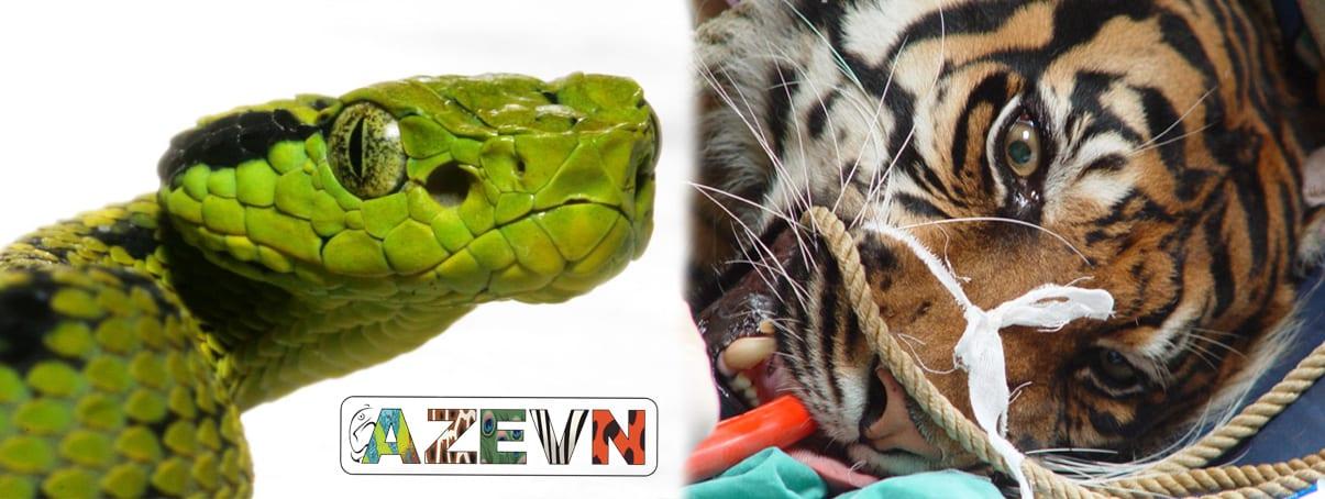 Banner 2 - Snake & Tiger